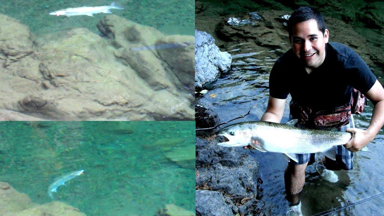 Steelhead fishing vancouver island b c summer trophy for Vancouver island fishing