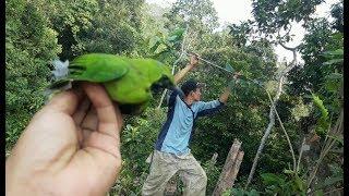 Gambar cover Burung cucak ijo - Mikat burung cucak ijo di alam liar PART 2