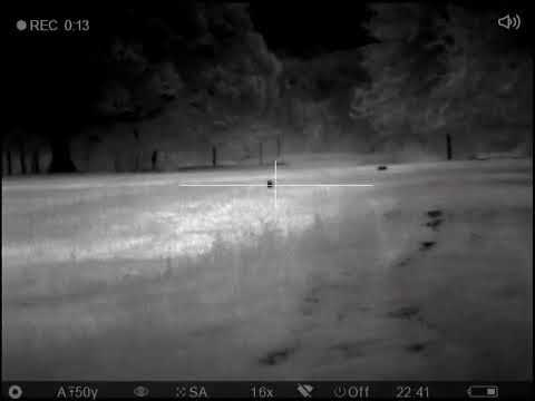 Shooting Coyotes with Thermal Scope