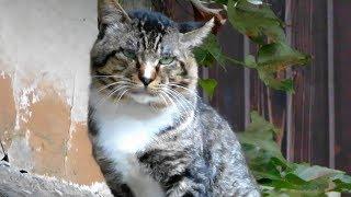 猫ハウス ~ある夜の出来事~ボスが来た!It happened at night