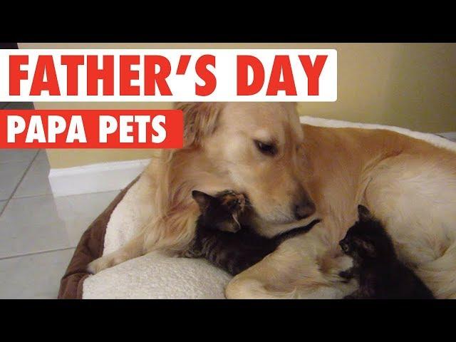 Fathers Day: Papa Pets