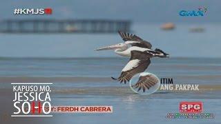 Kapuso Mo, Jessica Soho: Australian Pelican sa GenSan