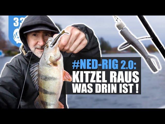 NED-RIG 2.0: so FÄNGST du BARSCHE + ZANDER  an ÜBERFISCHTEN Spots