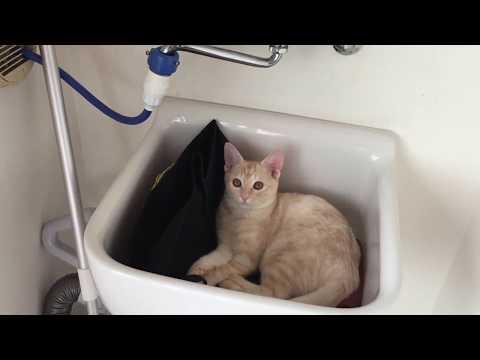 変な所でくつろぐ猫がかわいい Cute cat relaxing in the sink