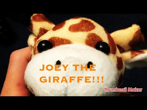 Joey the giraffe: the attack of the cat!