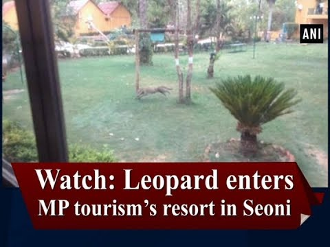 Watch: Leopard enters MP tourism's resort in Seoni - Madhya Pradesh News