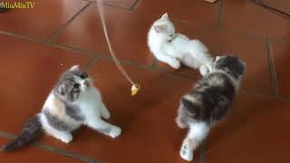 Play with 5 super cute kittens.