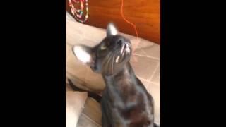 Приколы котики -ориентал- марта 13, 2016