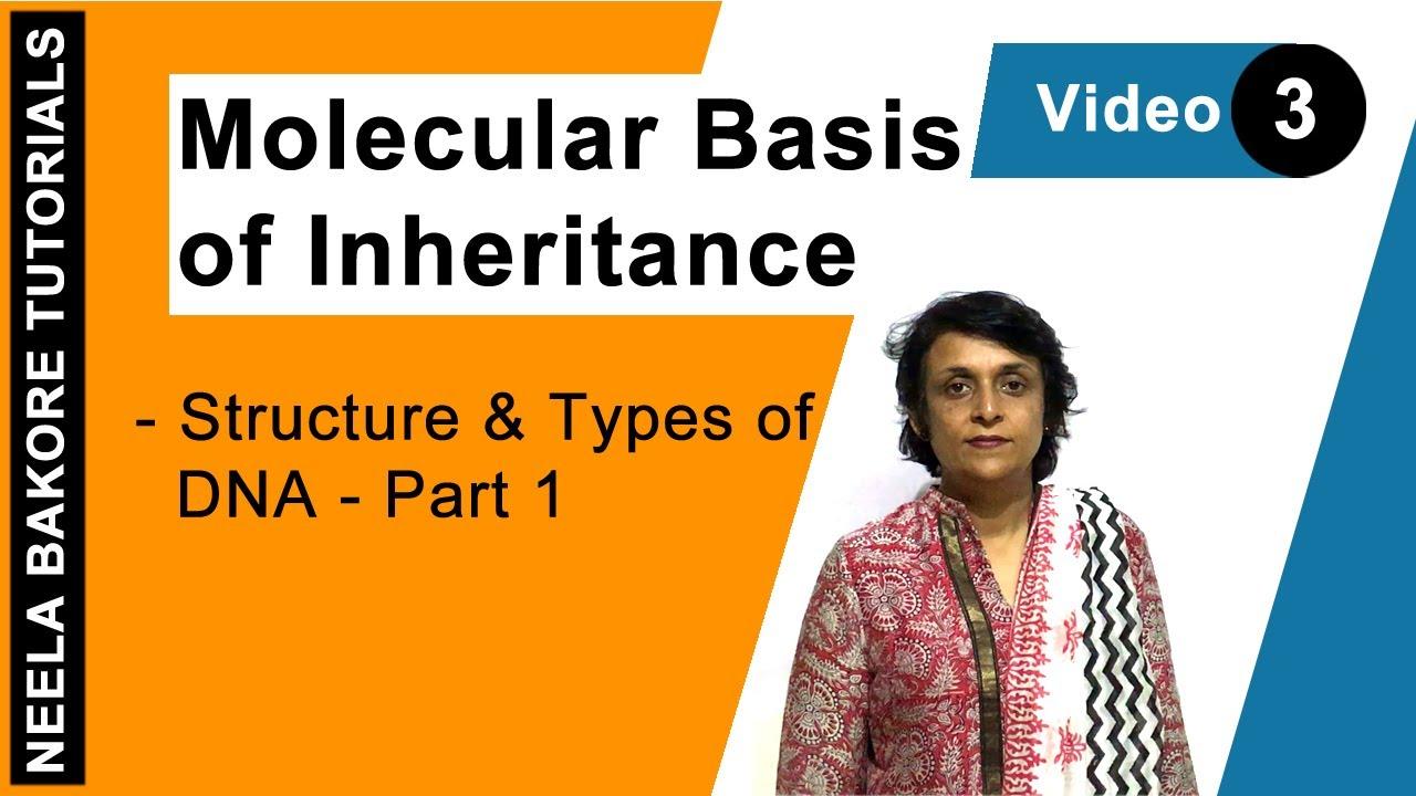 Molecular Basis of Inheritance - Structure & Types of DNA - Part 1 ...