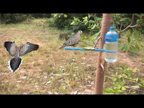 Wow!Amazingly, A Bottle Of Water Can Be A Bird Trap,How To Make Bird Trap Using Bottle Of Water.