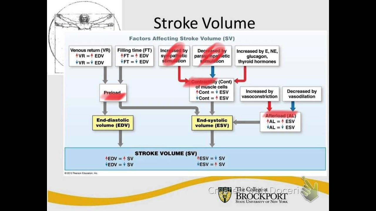 Stroke Volume Audio Tutorial - YouTube