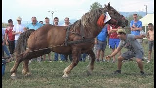 Concurs cu cai de tractine, proba speciala Sacalaseni, Maramures - 2018