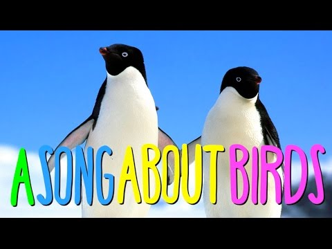 AUSTRALIAN SONG ABOUT BIRDS