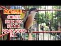 Cendet Gacor Ampuh Pancingan Cendet Lain Agar Ikut Bunyi Kicau Pidong  Mp3 - Mp4 Download