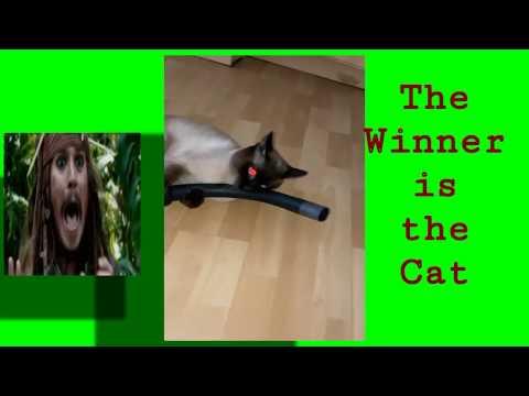 Katze Vs Staubsauger Das Musst Du Dir Ankucken♡ Cat Ist Fighting   #katzen #cats