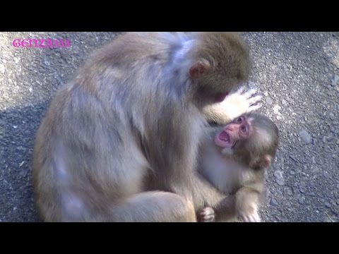 Baby monkey crying : baby monkey Videos Compilation
