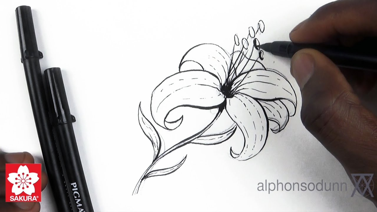 How to draw a lily featuring alphonso dunn of learn 2 draw how to draw a lily featuring alphonso dunn of learn 2 draw everything youtube izmirmasajfo