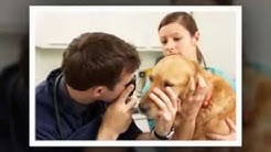 Mobile Pet Vaccinations for Dogs and Cats that are Low Cost in Pinellas County FL