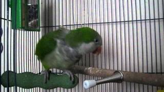 Mr Green Bean Machine - Gimme Kiss! Yes!!!!!!!!!!