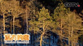 《远方的家》 20200428 大好河山 大兴安岭——绿色宝库| CCTV中文国际