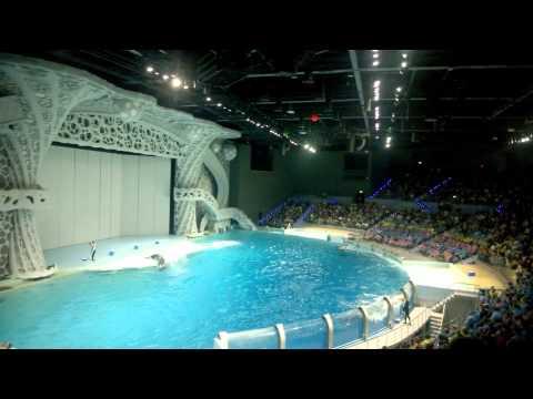 - плавание с дельфинами