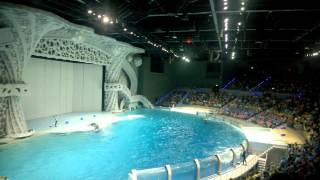 Москвариум на ВДНХ: как мы ходили на шоу с косатками и дельфинами