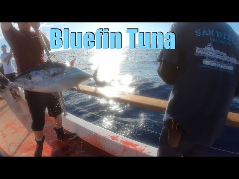 BLUEFIN TUNA Fishing / Seaforth Landing, The San Diego