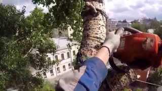 Спил деревьев | Промышленный Альпинизм Москва GoPro(Промышленный альпинисты высотки в летний сезон занимаются спилом деревьв в Москве. http://moscowalp.com/, 2015-07-30T07:32:58.000Z)