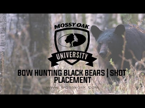 Bow Hunting Black Bears | Shot Placement