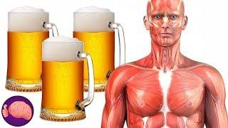Mira lo que le sucede a tu cuerpo si bebes CERVEZA TODOS LOS DÍAS🍺