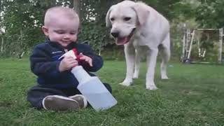 Top 10 Funniest Moment Between Babies and Dogs #2 | Funny Babies and Pets