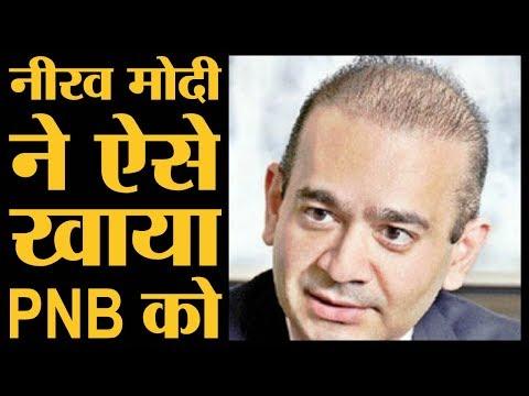 Nirav Modi पर PNB ने वित्त मंत्रालय को जो रिपोर्ट दी, वो हिलाने वाली है   The Lallantop