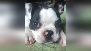 Sevimli Yavru Köpekler - Küçük Köpekler - Yavru Köpek Videoları