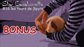 les Tours de Spyro - dressage cochon d'Inde