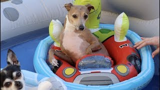 Throwing My Dogs A Pool Party