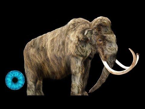 Das Mammut wiederbeleben - Dr. Frankenstein wird Realität! - Clixoom Science & Fiction