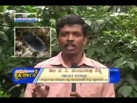 15 08 2014 ragi nuresy and transplanting dr c r ravishankar and coffee berry borer management dr g v