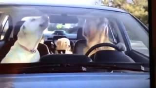 Family Of Golden Retrievers Subaru Commercial