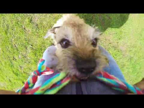BADASS DOG TRICKS by border terrier