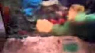 Fischi´s Kühlschrank xD Und ihre Mäuse