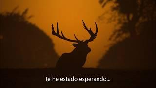 Future Islands – Seasons (Waiting on You) Subtitulada en español