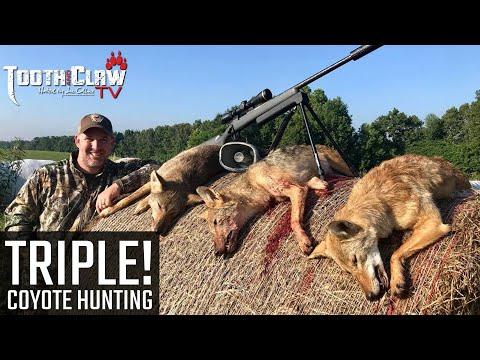 Triple!!! Coyote Hunting