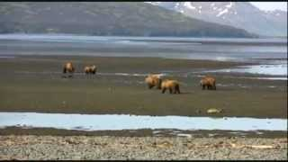 Grizzly Man Soundtrack (Timothy Treadwell)