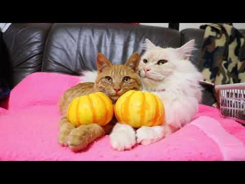 冬至 かぼちゃをのせたちゃとらともふ男