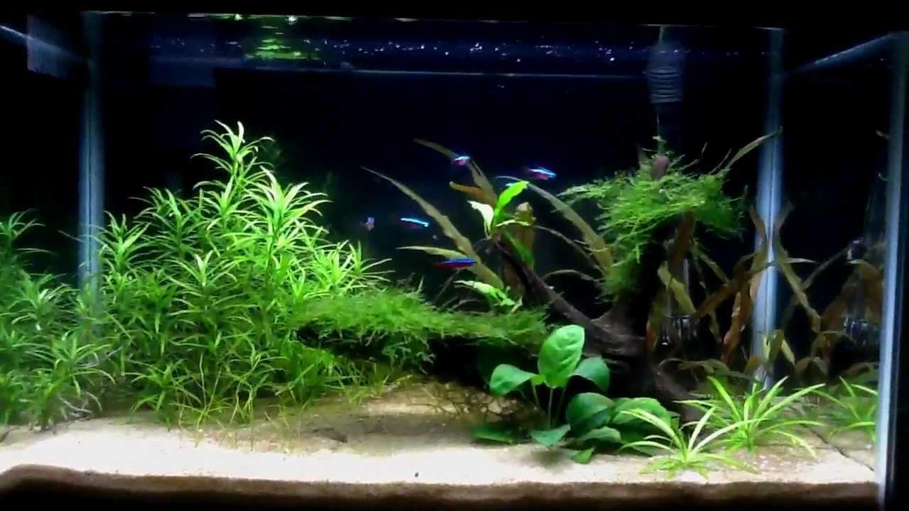 10 Gallon Planted Aquarium My First Dirt Planted Tank