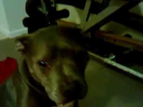 rocky dog rockstar