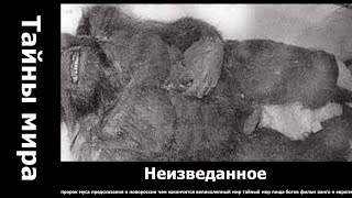 Неопровержимые доказательства существования Снежного человека.. святой пантелеймон целитель ютуб