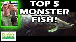 MONSTER Aquarium Fish, my TOP 5 LARGE FISH, I'm not going to keep in a Large Aquarium :)
