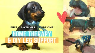 PUPPY SWIMMER SYNDROME HOME THERAPY + DIY LEG SUPPORT (20 DAYS EFFECTIVE TREATMENT)