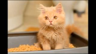 лотки для кошек с высокими бортиками